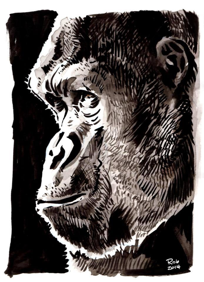 08-ape