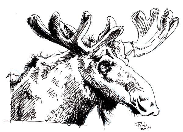 11-moose
