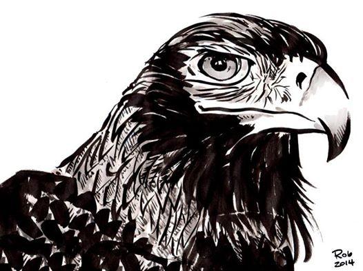 13-eagle