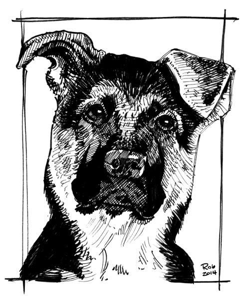 14-dog